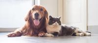 Pets Food  image