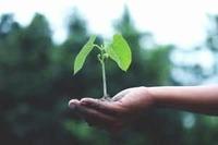 Plants & Seeds  image