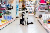 Pet Supplies image