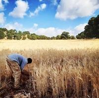 Farms  image