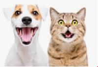 Pet Care image
