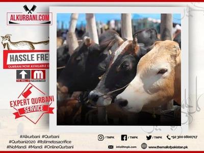 Premium Plus Cow (Complete Full Cow) image