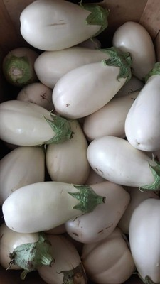berenjenas blancas ecológicas kg image