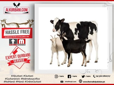 Standard Cow F&F (Sharing / Hissa or Complete Cow)   image