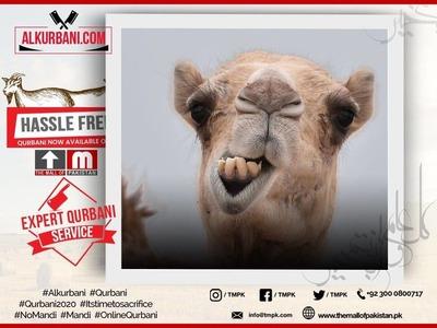 Camel Kurbani (Full Camel, Waqf)  image