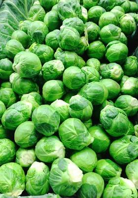 Coles de bruselas ecológicas ( Ud) image