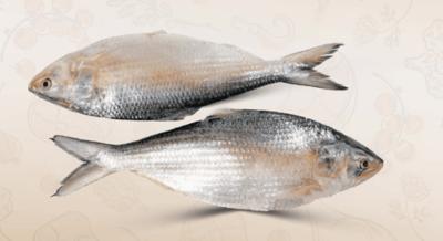 Ilish Fish Small 2Pcs image