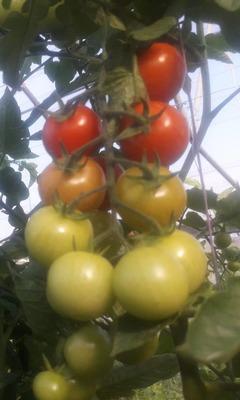 tomates cherry (250gr) image