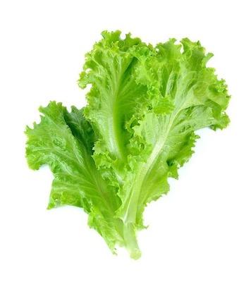 Green Lettuce 500 GM image