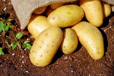 Patata temprana  ecológica (kg) image