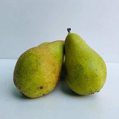 बाबूगोशा / Pears Indian 1 KG image