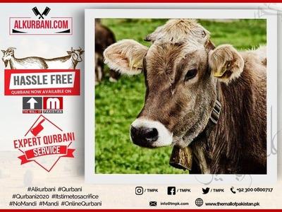 Premium Cow (Complete Full Cow) image