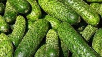 Pepinos ecológicos (kg) image