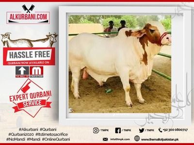 Prime Cow (Sharing / Hissa or Complete Cow) image